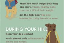 Outdoor Adventure with Pets / If you love your pet and outdoor life find some great ideas to go on trips, experience the outdoor life with your best pet friend by your side.
