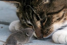 Animals: Opposites Attract
