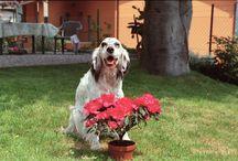 my very beautiful dogs / cani che hanno rallegrato e rallegrano la mia vita