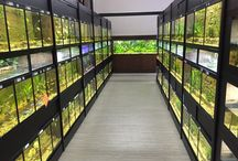 Amazing Fish Stores / Amazing Freshwater and or Marine Fish Stores.