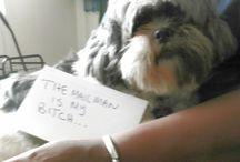 Postal/Delivery person Dog Shaming / Shame Shame!