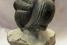 Τριλωβίτες - Trilobites