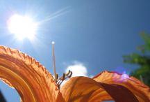 Photographies estivales / L'été apporte avec elle une tonne de possibilité de prises de vue et de couleur!