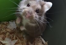 Pocket Pets / Are tinier pets more your thing?  When you see anything from a rat to a rabbit does your heart go all a-flutter?  This is the board for you!