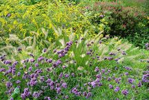 Verbena Combinations / Plant partnerships that include verbenas