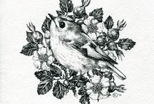 Птички_пташки_птахи