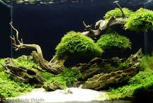 аквариум
