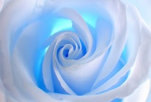 belas flores