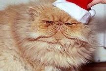 Blissemas / Christmas just got Erotic -- http://blissemas.co.uk / by Kevin Mitnik