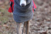 dogs fashion