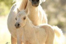 paarden :)