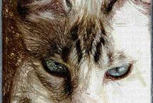 CHATS - CATS - GATOS-