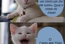 piadas do gato