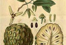 Sagrado Livro do Reino Vegetal / Catálogo de imagem sobre plantas