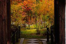 Finally Fall! / by Danielle Bragg