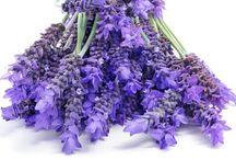 Pure Botanicals / Natures botanical ingredients - luxurious, pure, moisture.