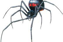spider ref