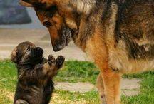 I love puppy's!!!