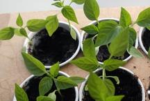 planten / wat voor planten?