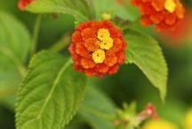 fleurs qui résistent sans eau
