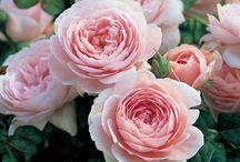 Roses et Pivoines