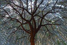 Trees *Heart*