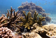 Diving in Koh Tao, Thailand / Our very own underwater playground! Come and explore with us at Big Blue Diving Resort!