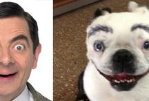 Dogs That Look Like British Celebs
