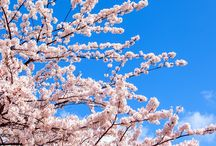 Local Sights :Spring / Local Sights :Spring