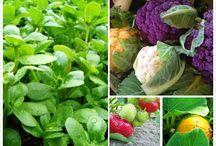 Hälsotips / Vårt mål är en Hållbar Hälsa – För Dig och vår Jord.  I Solgläntan gårdsbutik och ekocafé i Svenshögen hittar du massor av ekologiska, egenodlade grönsaker, torrvaror, hygienartiklar etc samt underbara rawfood tallrikar, gröna smoothies och rawfood kakor. Vi levererar hem till din dörr i stora delar av Södra Bohuslän. På våra kurser lär du dig ekologisk odling, pallkragsodling, raw food, hälsa och permakultur. Kurs kalendarium kolla på vår hemsidan www.hallbarhalsa.nu