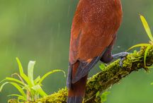 Renkli kuşlar