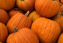Autumn / by Lisa