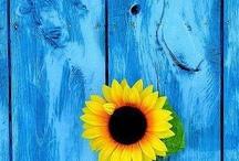 Sunflowers / by Marylynn Wanielista