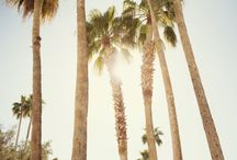 ~ Palm Trees And 80 Degrees ~ / Y.E.S.  P.L.E.A.S.E / by Holly Nelson Rader