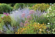 Frannie's Gardening Pins / Indoor/outdoor gardening, Fairy Gardens, Veggie Gardens