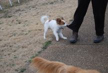 Training Dogs / Tips for training your dog to do almost anything.
