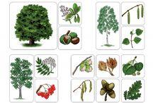 stromy a ich plody