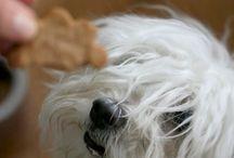 Dogs / by Jennifer