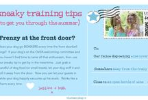 Sneaky Training Tips (to make it through the summer!) / Quick dog training tips
