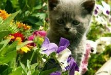 Mouky_cat