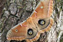 Kelebekler - Butterflies