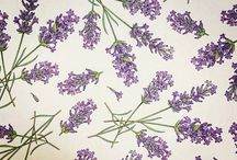 PAPERS - LAVENDER