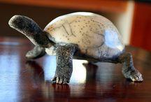 tortues et poissons
