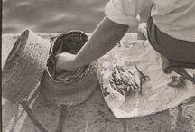 El Campello en el recuerdo: la pesca / El Campello, no hace tanto, era un pequeño pueblo de agricultores y pescadores que vivían en zonas bien diferenciadas del mismo y cuyas vidas transcurrían de forma paralela,  aunque a veces se unían, y en realidades muy distintas. Aquí algunas fotos para el recuerdo del mundo de la pesca.