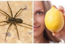 Spindlar och ohyra
