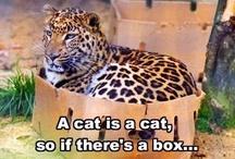 A cat will be a cat!
