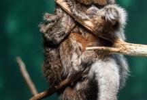 Ref. - Monkeys