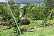 Garden problems