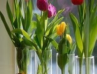 TULIPS ARE MY FAVORITE FLOWERS / by Dawn Jackson
