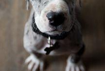 #doggy♡